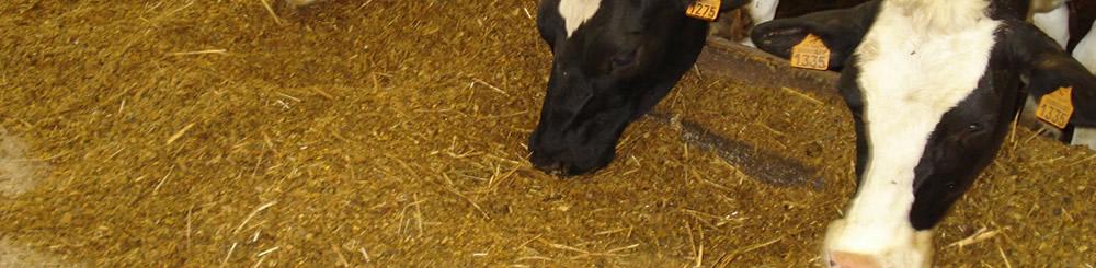 Veehouderijen in Nederland slider