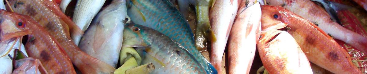 Zoek een viswinkel slider